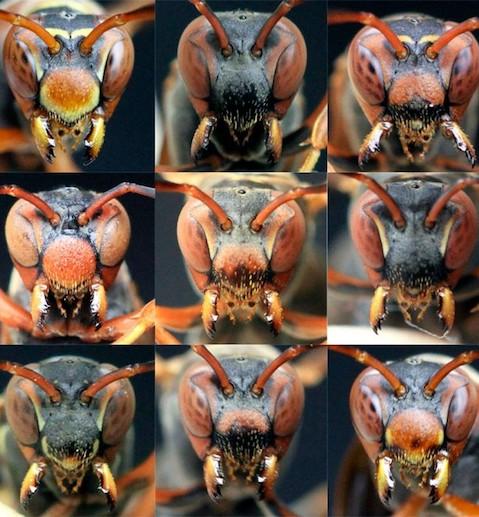 Michael Sheehan's Wasps